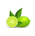 realistic detailed 3d whole green fruit lime and vector image vector image