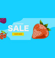 summer sale web banner with berries vector image