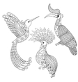 Coloring page with Bird Rhinoceros Hummingbird vector image