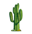 colorsaguaro arborescent tree-like cactus ink vector image vector image