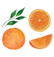 Set of oranges vector image vector image