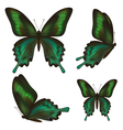set realistic green butterfly vector image vector image
