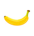 yellow banana isolated on a white background vector image vector image