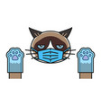 grumpy cat in medical face protection mask vector image
