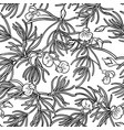 rooibos seamless pattern vector image