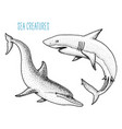 sea creature dolphin and white shark engraved vector image vector image