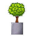 A green plant and the concrete gray pot vector image vector image