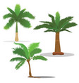 palm trees in different type vector image vector image