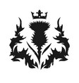 scottish thistle vector image