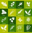 herbs hand drawn big icon squared set vector image