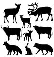 animals of the forest vector image vector image