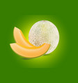 cantaloupe melon vector image vector image