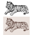 original artwork tiger black sketch drawing animal vector image