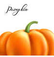 realistic pumpkin halloween thanksgiving vector image vector image