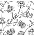 safflower seamless pattern vector image vector image