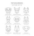 top dog breeds hunting shepherd and companion vector image vector image