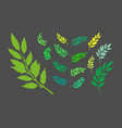 laurel branches vector image