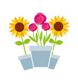 potted flowers gardening decoration isolated vector image