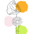 drawing poppy flowers vector image vector image