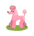 pink poodle dog purebred pet animal standing on vector image