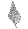 seashell over white background line art marine vector image vector image