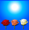 trio of red pink and white roses over sunny sky vector image vector image