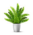 fern in a pot vector image vector image