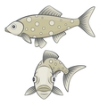 Full face and side view of river or sea fish vector image