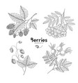 hand drawn set of berries rowan raspberry vector image vector image