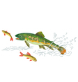 Brook-trout-predator-catch vector image