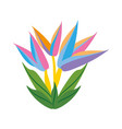bird of paradise flower spring vector image vector image