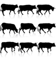 Collection black silhouettes of cow vector image