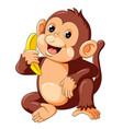 cute monkey sitting and holding banana