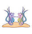 seahorses couple animal with seaweed plants vector image