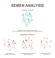normal and abnormal sperm vector image