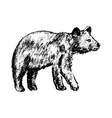 bear icon grunge style vector image vector image