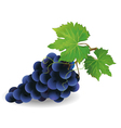 Black grape vector image vector image