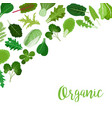 organic banner with salad leaves vector image