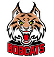 bobcat head mascot vector image vector image