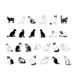 cat collection clipart vector image vector image