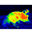 Infrared ragdoll cat vector image vector image