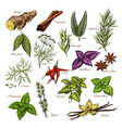 spices and herbs sketch icons of seasonings vector image vector image