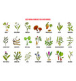 best herbal remedies for liver cirrosis vector image vector image