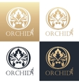Calligraphic design element Golden logo vector image vector image