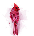 cardinal red bird watercolor isolated on vector image vector image