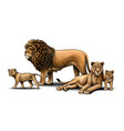 family lions pride vector image vector image