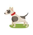 pitbull dog purebred pet animal standing on green vector image