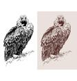 artwork of griffon vulture Aegypius monachus vector image vector image