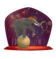 circus elephant on ball chapiteau show vector image