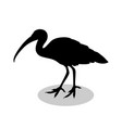 ibis bird black silhouette anima vector image vector image